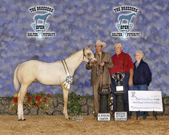 CK Beretta - 2012 BHF Champion Open Jr Stallion