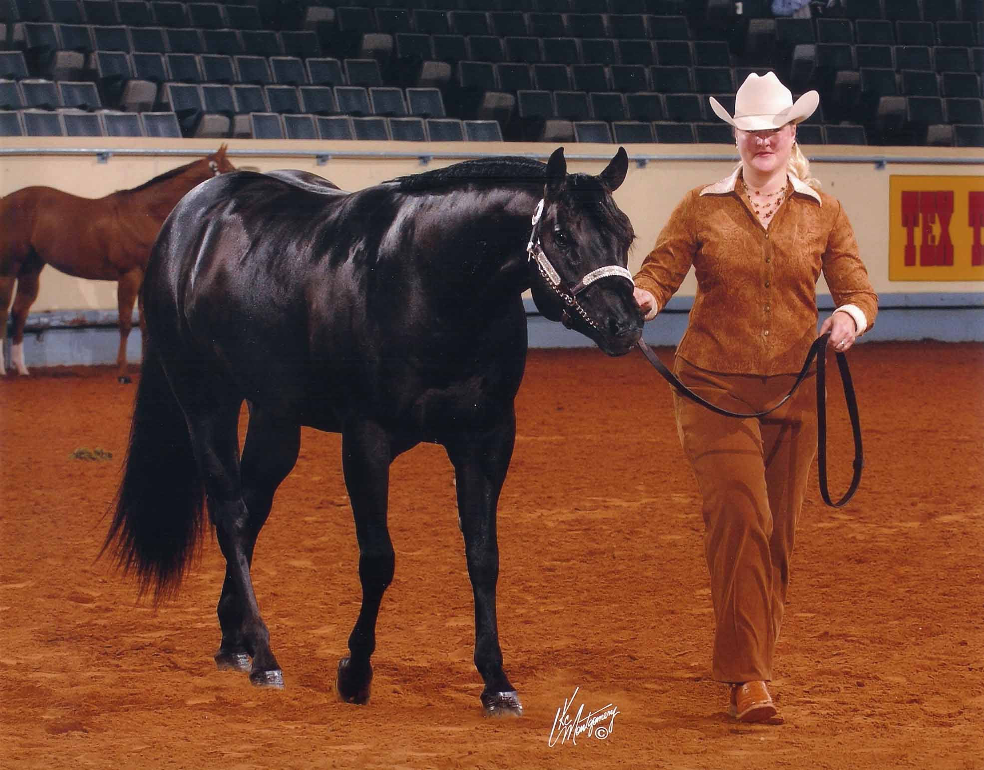 Repercussions -2006 AQHA World Show